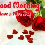 Red Rose Good Morning Images pictures download