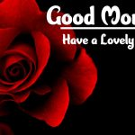 Red Rose Good Morning Images pictures free hd