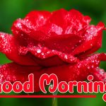 Red Rose Good Morning Images wallpaper free hd