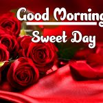 Red Rose Good Morning Images photo free download
