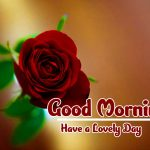 Red Rose Good Morning Images pics photo hd