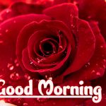 Red Rose Wishes Images wallpaper download