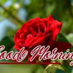 Red Rose Wishes Images pics photo hd download