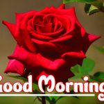 68+ Red Rose Images Love HD Good Morning Download