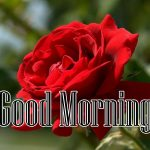 Red Rose Wishes Images photo hd