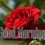 Red Rose Wishes Images photo download