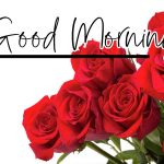 Red Rose Wishes Images pics hd