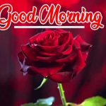 Red Rose Wishes Images photo hd download