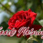 Red Rose Wishes Images photo free hd