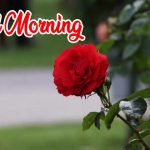 Red Rose Wishes Images pictures download