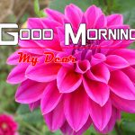Top Hd Flowers Good Morning Photo