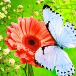 Whatsapp Dp Images hd