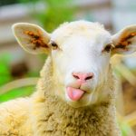 Whatsapp Funny Animal Images
