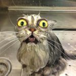 funny wet cats coverimage