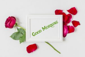 nice Red Rose Good Morning Images