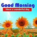 Amazing Best Sunflower Good Morning Images