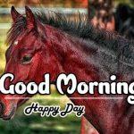 Beautiful Free Good Morning Images photo pics download