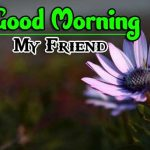 Beautiful Free Good Morning Images wallpaper pics hd