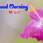 Beautiful Free Good Morning Images pictures pics hd