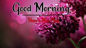 Beautiful Good Morning Images wallpaper free hd