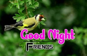 Beautiful Good Night Download