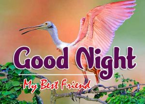 Beautiful Good Night Photo IMages