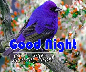 Beautiful Good Night Photo Wallpaper