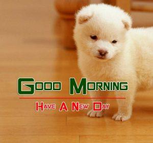 Best Cute Good Morning Pics