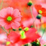 Flower Best Dp Images Pics Photo Download