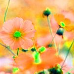 Beautiful Flower Best Dp Images Photo Download