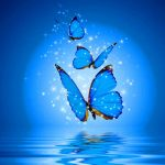 Butterfly Best Dp Images Pics Download