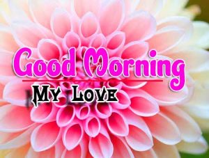 Best Good Morning For Whatsapp Free