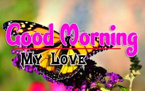 Best Good Morning For Whatsapp Pics Images