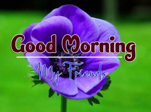 Best Good Morning Friday Free