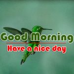 Best Good Morning Images Hd Free Pics