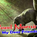 Best Good Morning Images Pics