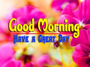 Best Good Morning Pictures Free