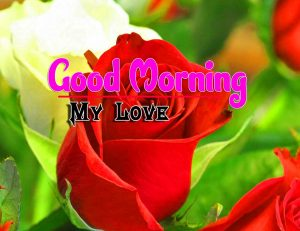 Best Good Morning Pictures Photo