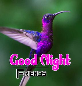 Best Good Night Images For Friends Photo Free