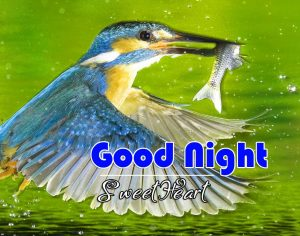 Best Good Night Images For Friends Photo Hd