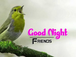 Best Good Night Images For Friends Photo Images