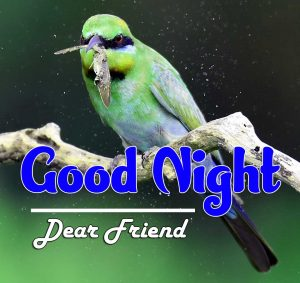 Best Good Night Images For Friends Pics Images