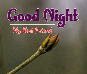 Best Good Night Images For Friends Wallpaper Free
