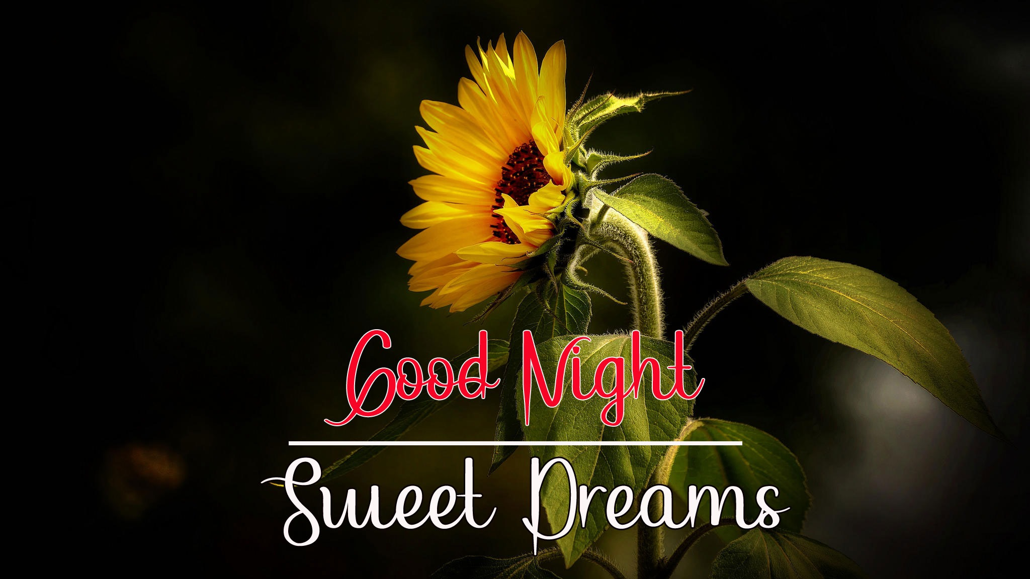 Best Good Night Images pics wallpaper hd