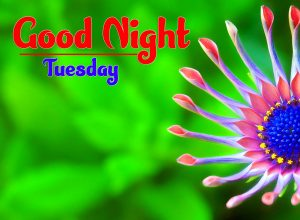 Best New Good Night Tuesday Images Downlaod