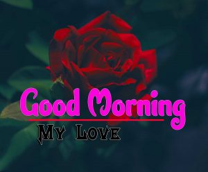Best Spcieal Good Morning Images Hd