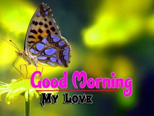 Best Spcieal Good Morning Pictures Hd