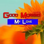 Best Sunflower Good Morning Images Photo