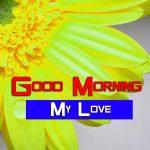 Best Sunflower Good Morning Photo
