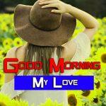 Best Sunflower Good Morning Photo Pics
